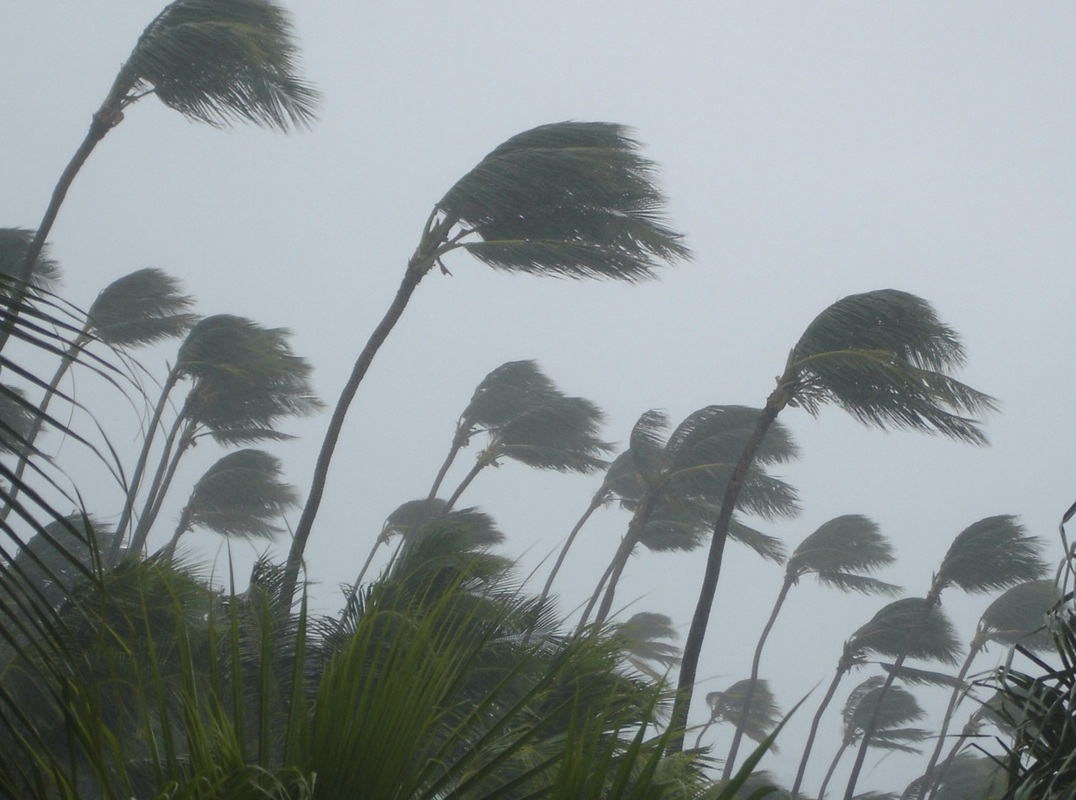 photo of palm trees in high winds